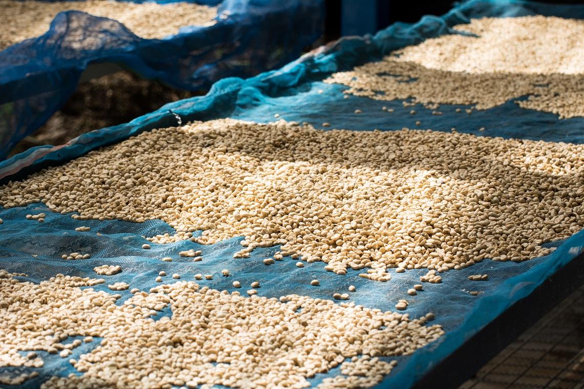 il caffè lavato e il caffè naturale