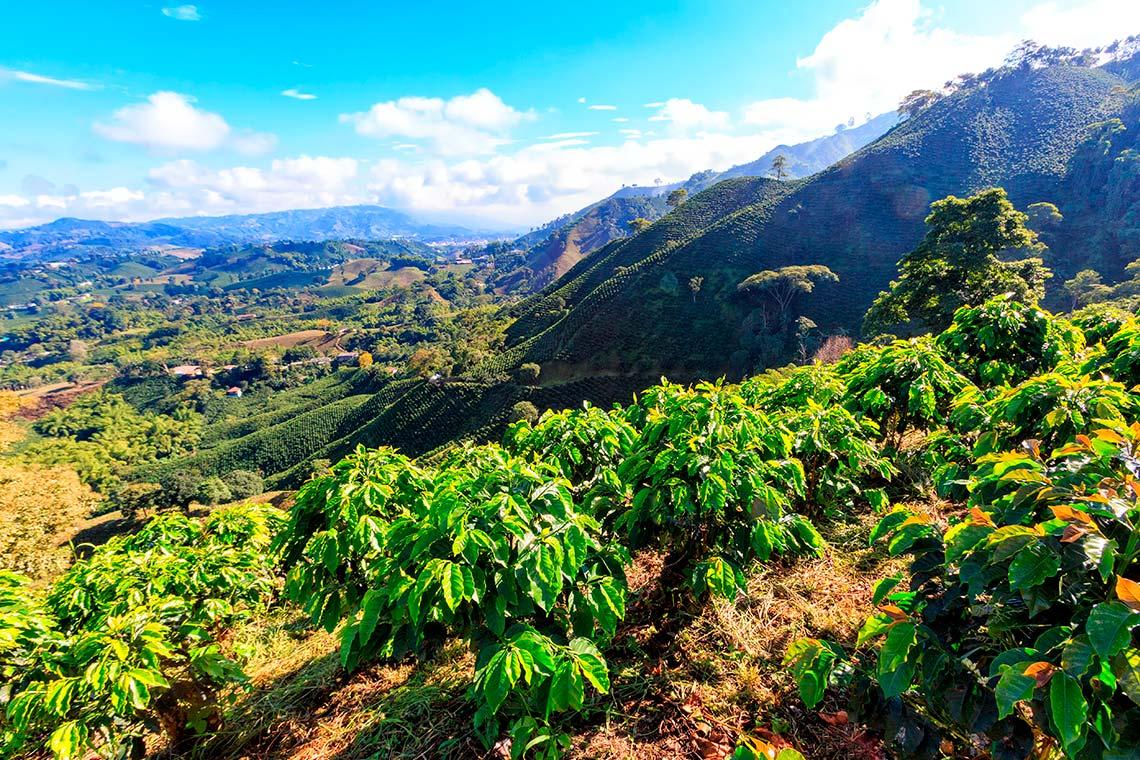 Piantagioni di caffè colombiano