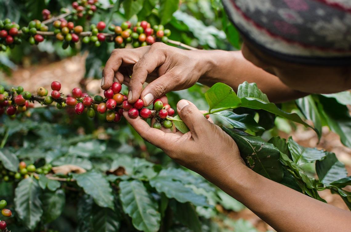 Miglior caffè da agricoltura biologica
