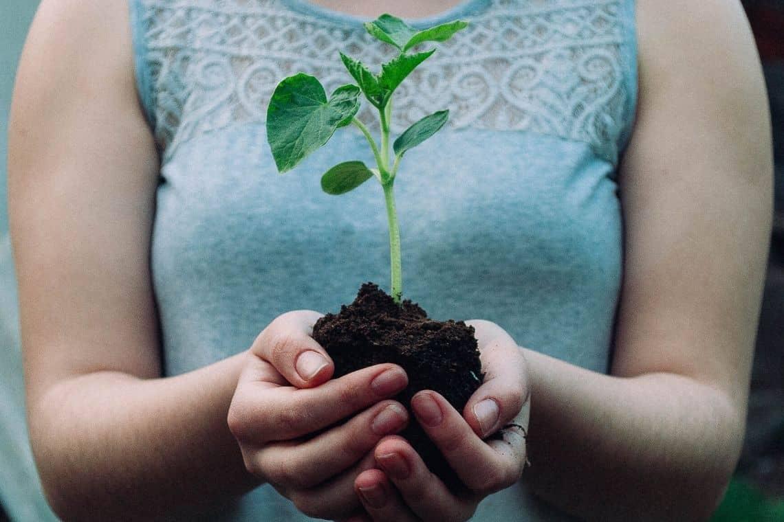 fondi di caffè usati per concimare il terreno delle piante