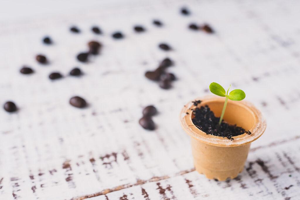 seminare piante con capsule di caffè